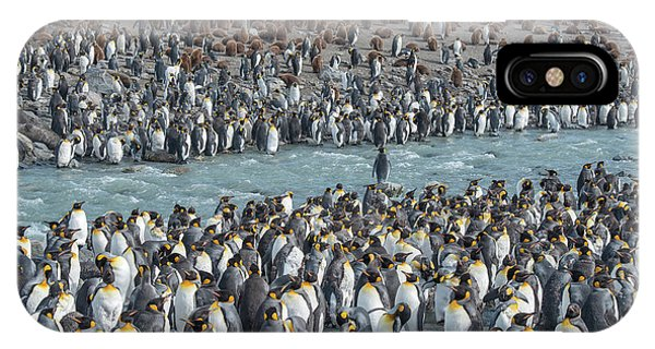 Cold Day iPhone Case - Colony Of King Penguins, Aptenodytes by Tom Murphy