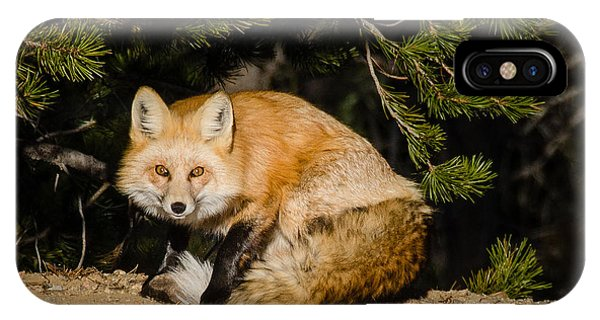 Colorado Red Fox IPhone Case