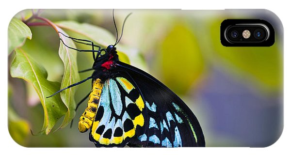 colorful butterfly Ornithoptera priamus IPhone Case