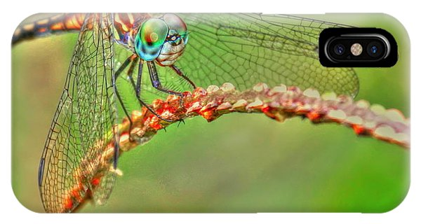 Colorful Dragonfly IPhone Case