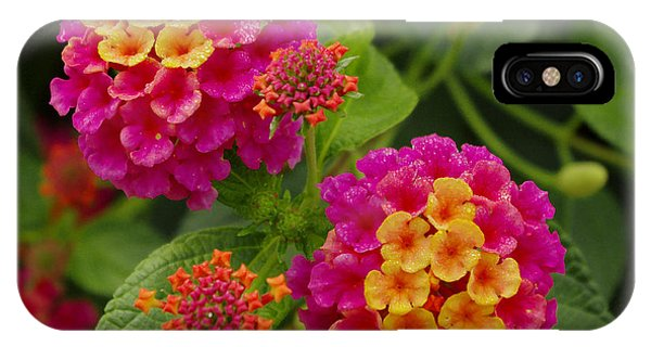 Colorful Lantana  IPhone Case