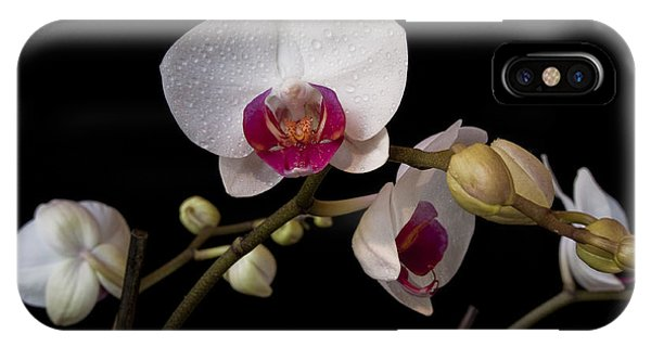 Colorful Moth Orchid IPhone Case