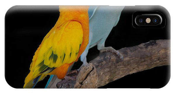 Sun Conure And Ring Neck Parakeet IPhone Case