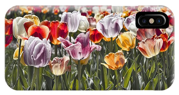 Colorful Tulips In The Sun IPhone Case