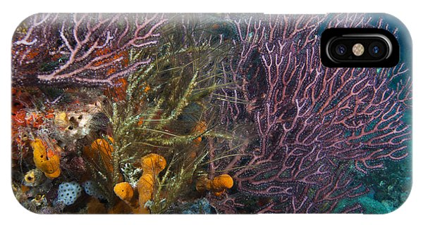Colors Of Reefs IPhone Case