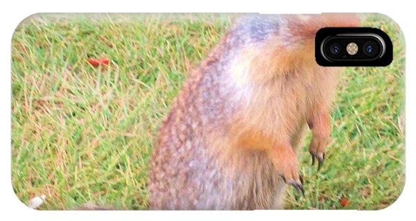Columbian Ground Squirrel IPhone Case