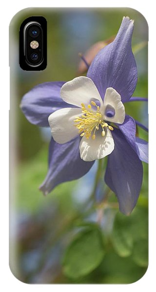 Aquilegia iPhone Case - Columbine (aquilegia X Hybrida 'swan Blue And White') by Maria Mosolova/science Photo Library