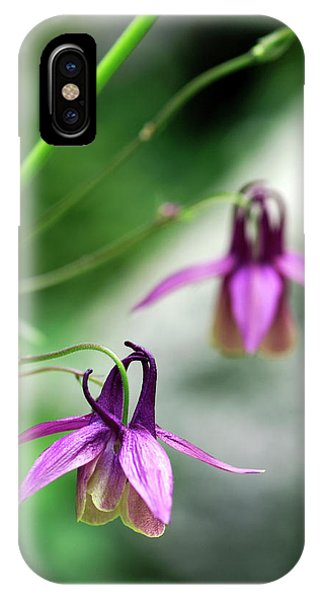 Aquilegia iPhone Case - Columbine Flowers (aquilegia Oxysepala) by Brian Gadsby/science Photo Library