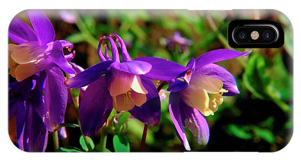 Aquilegia iPhone Case - Columbine by Mike Vardy/science Photo Library