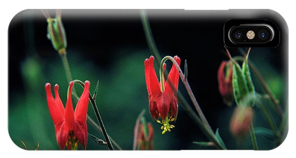 Aquilegia iPhone Case - Columbine by Science Photo Library