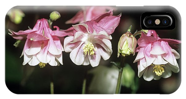 Aquilegia iPhone Case - Columbine 'strawberry Surprise' Flowers by Adrian Thomas/science Photo Library