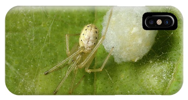 Comb-footed Spider Phone Case by Nigel Downer
