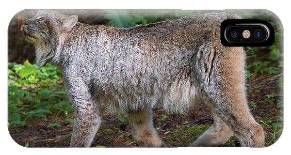 Lynx iPhone Case - Lynx Stare by Mike Dawson