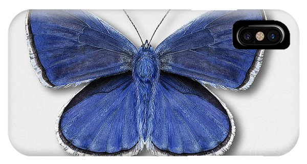 Common Blue Butterfly - Polyommatus Icarus Butterfly Naturalistic Painting - Nettersheim Eifel IPhone Case