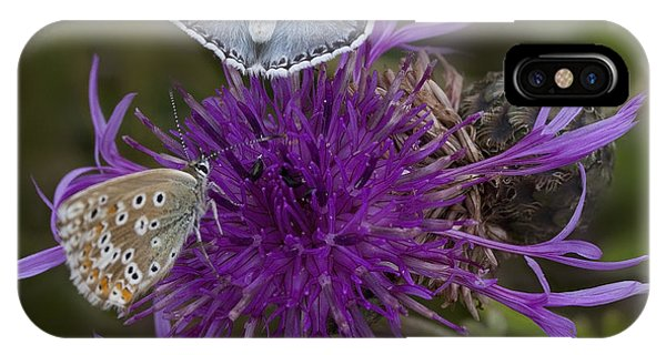 Common Blue Butterfly IPhone Case