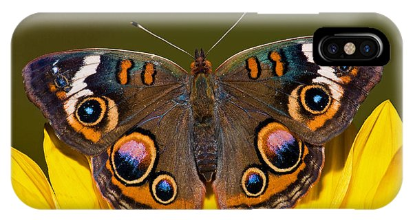 Pterygota iPhone Case - Common Buckeye by Millard H. Sharp