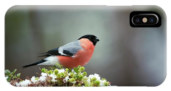 Common Bullfinch Phone Case by Dr P. Marazzi/science Photo Library
