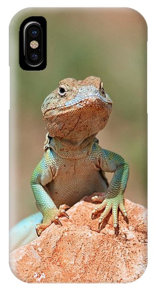 Common Collared Lizard 2 IPhone Case