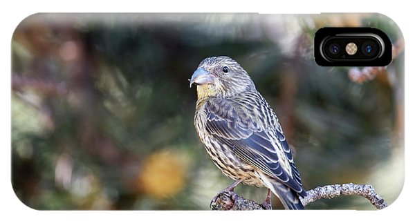 Common Crossbill Juvenile IPhone Case