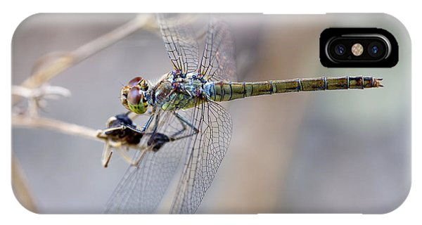 Common Darter Female On Crete IPhone Case