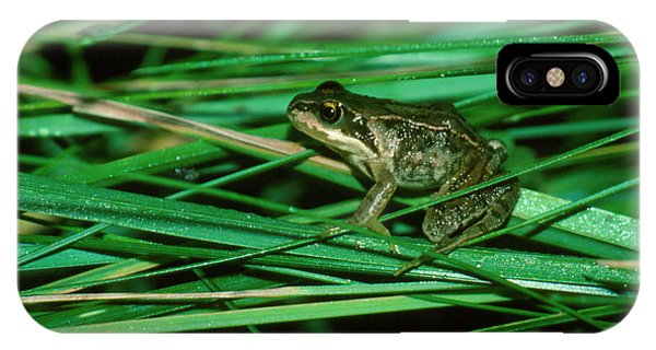 Common Frog Phone Case by Dr Morley Read/science Photo Library.