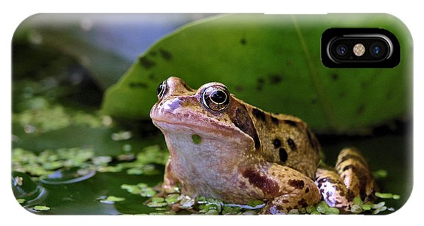 Common Frog IPhone Case