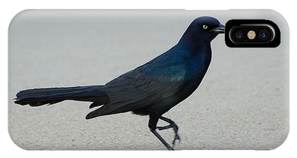 Brian Rock iPhone Case - Common Grackle by Brian Rock