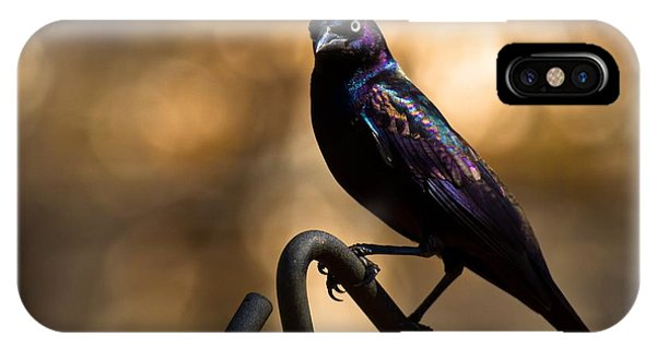 Common Grackle IPhone Case