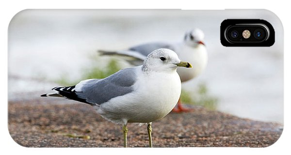 Common Gull And Black-headed Gull Phone Case by John Devries/science Photo Library