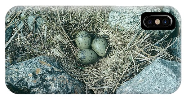 Northern Scotland iPhone Case - Common Gull Eggs by Anthony Cooper/science Photo Library