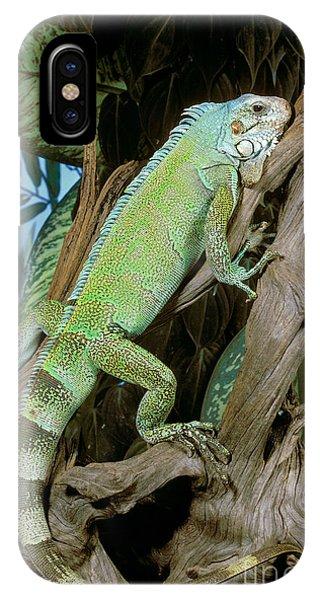 Wildlife Er iPhone Case - Common Iguana by ER Degginger