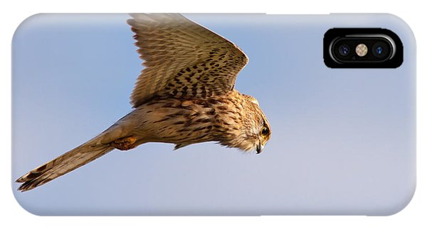 Common Kestrel Hovering In The Sky IPhone Case