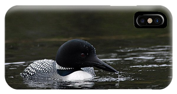 Common Loon 1 IPhone Case