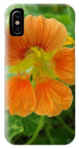 Common Nasturtium IPhone Case