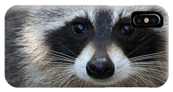 Common Raccoon IPhone Case