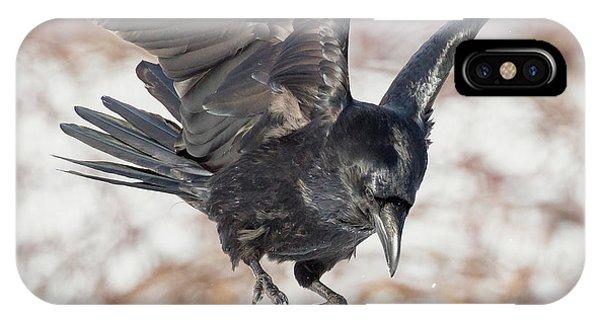 Common Raven Square IPhone Case