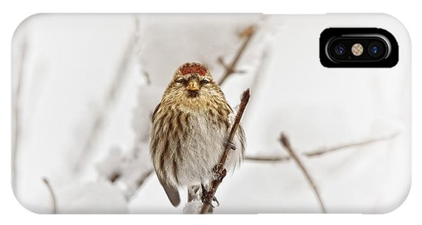 Migratory Birds iPhone Case - Common Redpoll by Susan Capuano