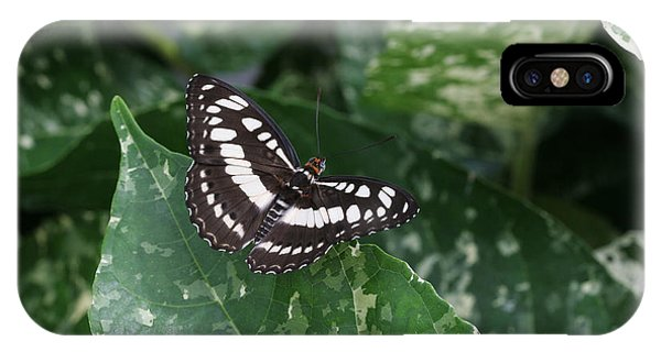 Common Sergeant Butterfly IPhone Case