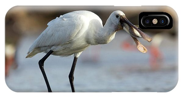 Common Spoonbill (platalea Leucorodia) IPhone Case