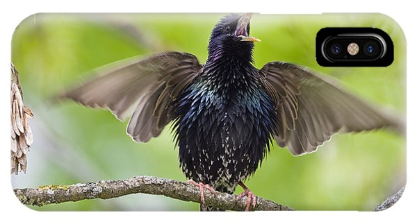 Common Starling Singing Bavaria IPhone Case