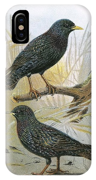 Starlings iPhone Case - Common Starling Top And Intermediate Starling Bottom by English School
