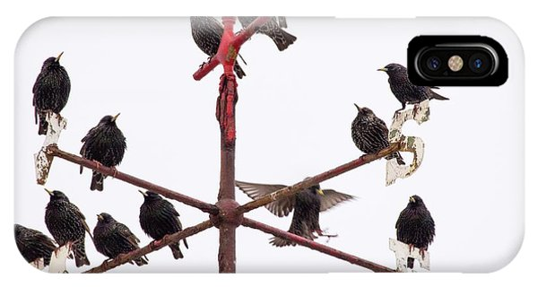 Starlings iPhone Case - Common Starlings by Ashley Cooper