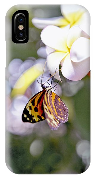 Common Tiger Glassywing Butterfly On Plumeria Bloom IPhone Case