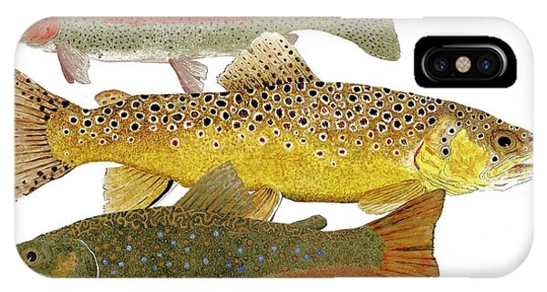 Common Trout  Rainbow Brown And Brook IPhone Case