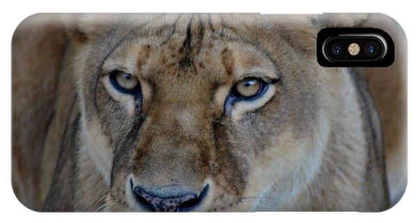 Concerned Lioness IPhone Case