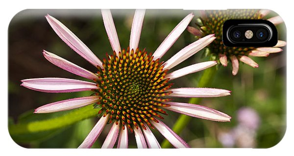 Cone Flower - 1 IPhone Case