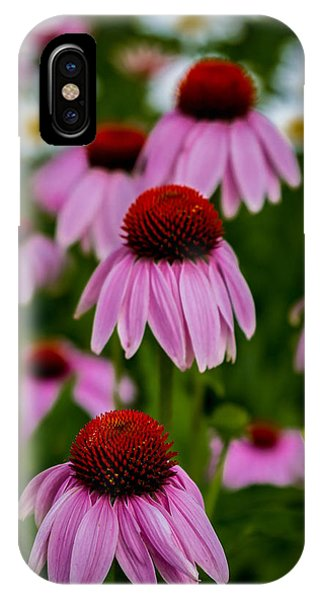 Coneflowers In Front Of Daisies IPhone Case