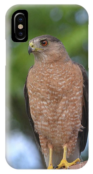 Cooper's Hawk I IPhone Case