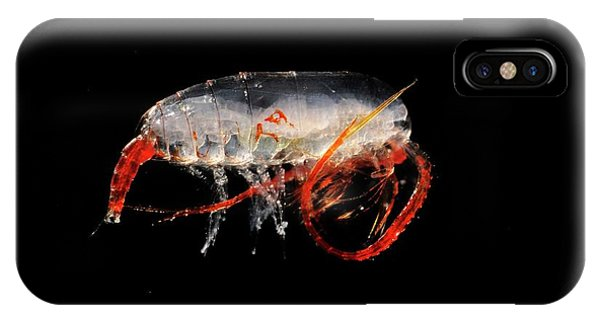 Copepod Crustacean Phone Case by British Antarctic Survey/science Photo Library