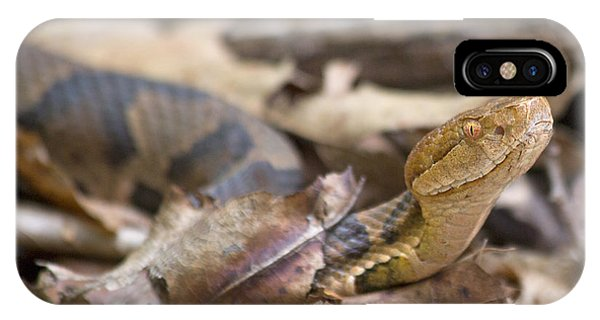 Serpent iPhone Case - Copperhead In The Wild by Betsy Knapp